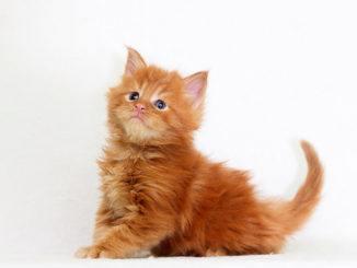 advertising cute cat