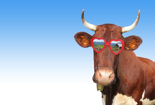 Cows wearing VR headsets make you laugh, it might make you think too